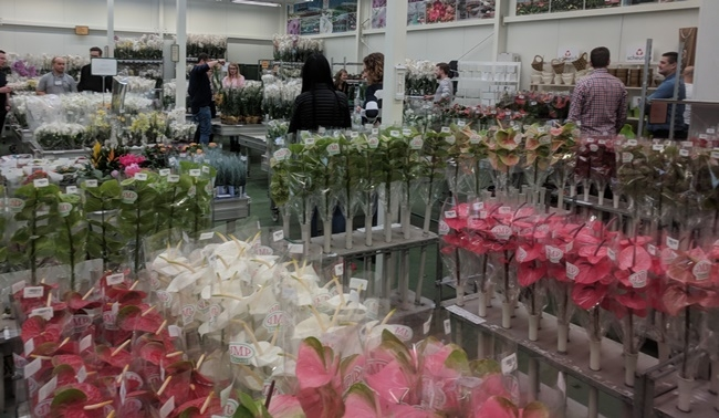 Szkolenie dla JMP Flowers, kwiatowego potentata na polskim rynku